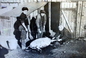 Malvina su šeima Sibire, kad išgyventų, net ir kiaules augino