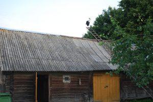 2010 m. gandras įsitaisė ant kopėčių / Česlovo Skaržinsko nuotraukos